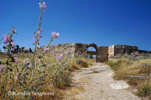 Hierapolis - flower