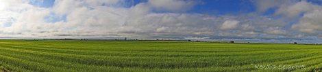 Countryside (13)