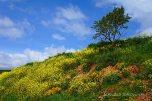 Countryside (3)