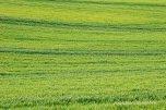 Countryside (9)