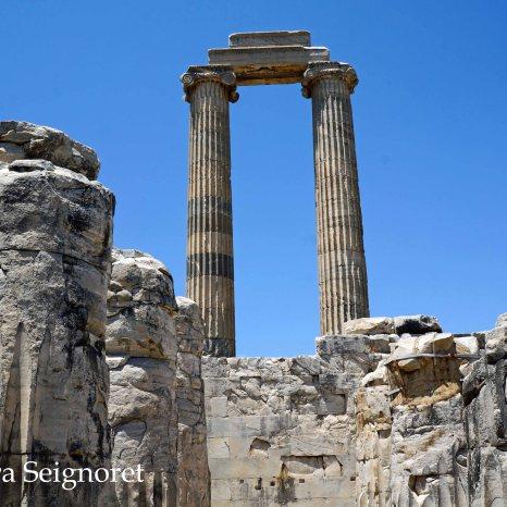 Didyma - Temple of Apollo (4)