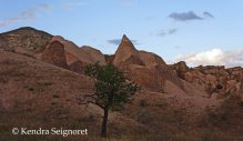 Red Valley Tree