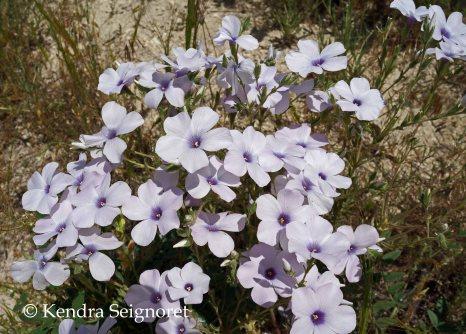 Love Valley Flowers