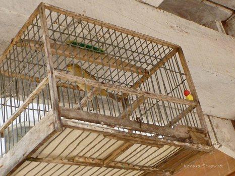 Berbice - animals (1)