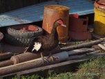 Berbice - animals (3)