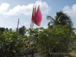 Berbice - Prayer Flags amongst the Green