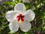 Berbice - flowers