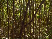 Jungle Close-Up