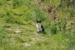 Kitty on Guard