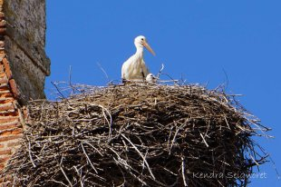 Momma and Baby Stork