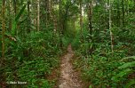 Rainforest Trails