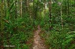 Rainforest Trails