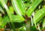 Insects (2)
