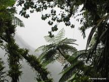 Enbas Saut Trail (2)