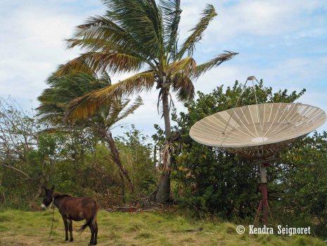 Donkey and Satellite
