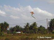Kites at Easter