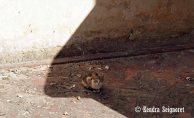 Cat in Shade