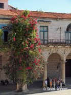 Flowers in Plaza