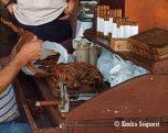 Choosing the perfect tobacco leaf