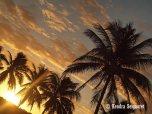 Sunrise Palms