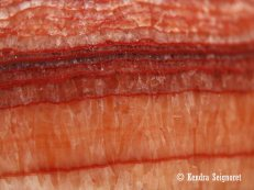Red Striations