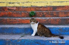 Kitty and Colour