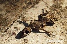 Lizard - Death