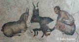 animal husbandry (1)