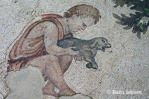 animal husbandry (3)