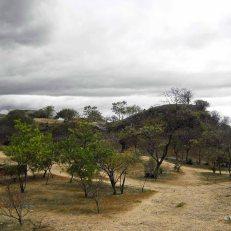 Monte Alban - trees (2)