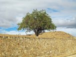 Monte Alban - trees (3)