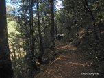 hike (3)