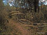 hike (8)