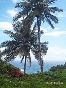 territory views (1)