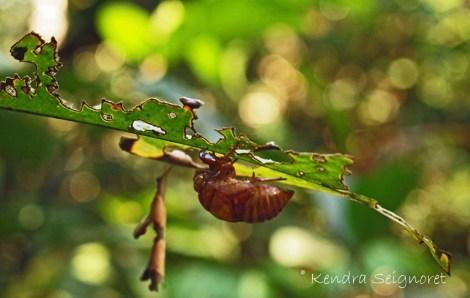Bug - Bokeh