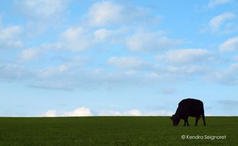 Cow - Rule of Thirds