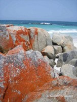 Australia - orange rocks