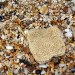 Negwamah Beach hike - beach stuff (1)