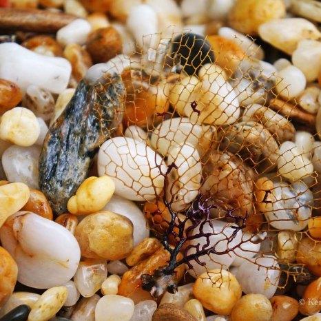 Negwamah Beach hike - beach stuff (4)