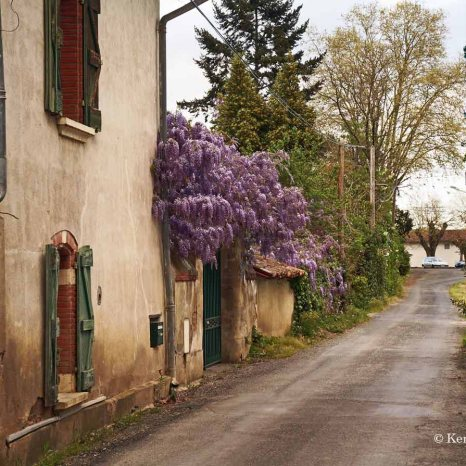 streets (4)