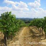 vineyards (1)