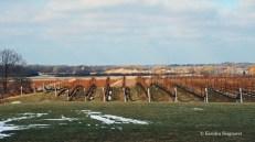 winter wine tasting (8)