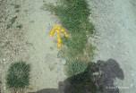my shadow and an orange peel arrow