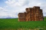 biggest haystack I've seen