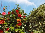 Penzance flowers