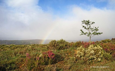 Rainbow to start the day