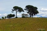 Vineyard and a house with fantastic views