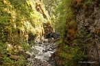 Englishman River Falls Provincial Park (8)