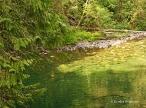 Englishman River Falls Provincial Park (9)