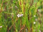 Eden Project - Mediterranean biome